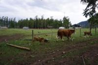 Silver Tip Ranch_KC_farmtour_23Apr2019 (10).jpg