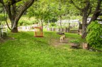 dog-garden.jpg