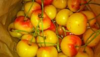 cherries-610x350-1.jpg