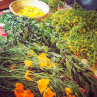 locally-wildcrafted-herbs.jpg