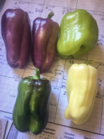 EO-Bell-peppers-1-scaled.jpg