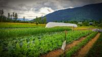 Glade-farm.jpg