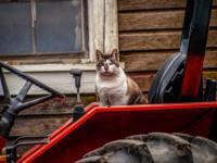 SpicerFarm-cat-scaled.jpg