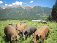pig-mountain.jpg