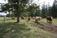 Silver Tip Ranch_KC_farmtour_23Apr2019 (7).jpg