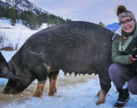 alyssa-with-pig.jpg