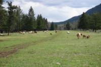 Silver Tip Ranch_KC_farmtour_23Apr2019 (4).jpg
