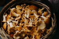 basket-of-mushrooms-1249884_edit.jpg