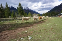 Silver Tip Ranch_KC_farmtour_23Apr2019 (6).jpg