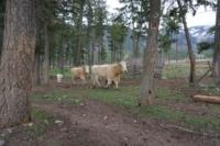 Silver Tip Ranch_KC_farmtour_23Apr2019 (11).jpg