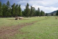 Silver Tip Ranch_KC_farmtour_23Apr2019 (3).jpg