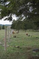 Silver Tip Ranch_KC_farmtour_23Apr2019 (8).jpg