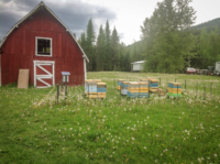 barn-and-hives-scaled.jpg