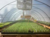 greenhouse-starts.jpg
