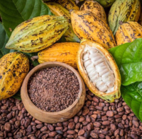 Wild-Mountain-Chocolate-cocoa-pods-beans-nibs-2019.jpg