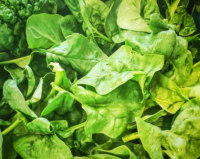 organic-spinach-from-Edibles-Acres-e1566949551986.jpg